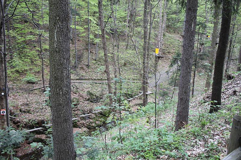 Leśny park